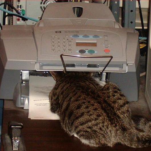 cat fax blank template