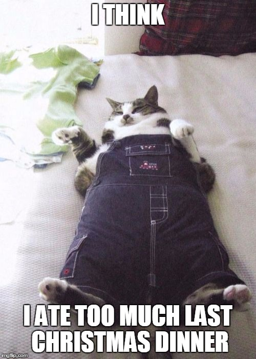 Fat Cat Meme  Imgflip