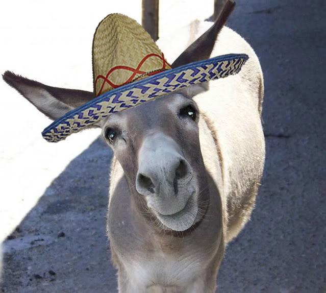 High Quality Donkey wearing sombrero Blank Meme Template