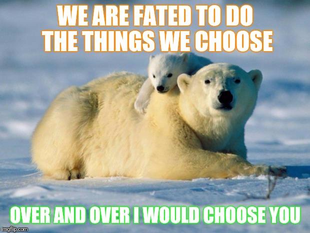 Polar Bear Meme Generator