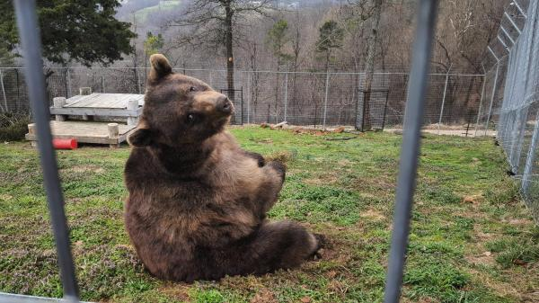 20 Momma Bear Meme Pictures And Ideas On Meta Networks