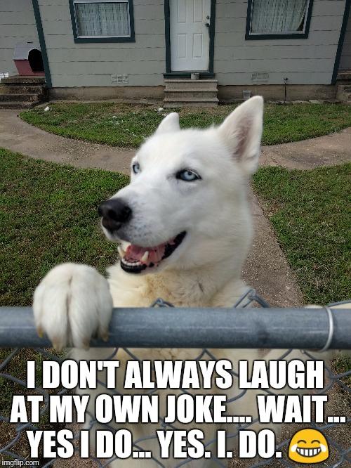 Laughing Dog Meme : laughing, Laughing, Memes, Imgflip