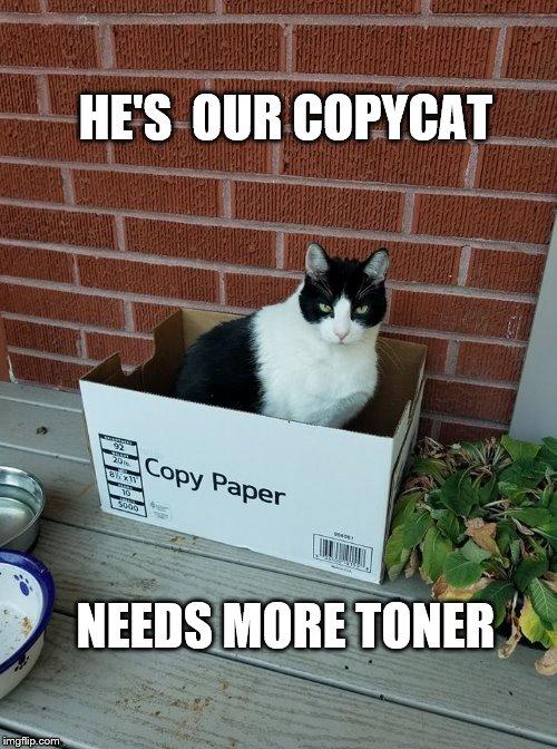 funny cat memes  Imgflip