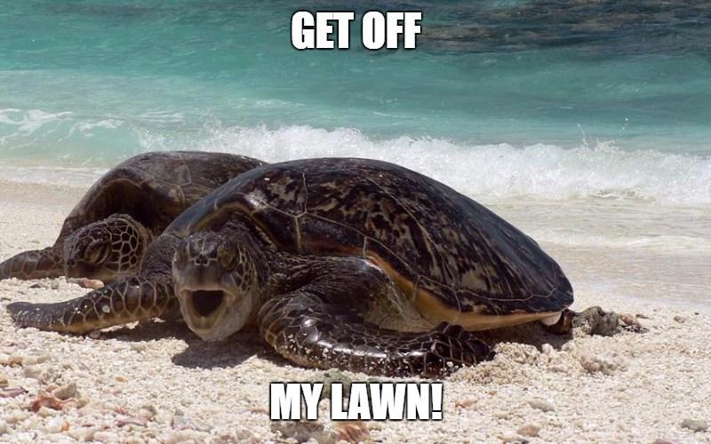 6 Ways You Can Protect Sea Turtles - Lawn furniture