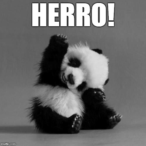 cute panda says hi