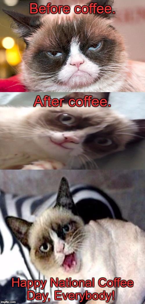 Grumpy Cat Happy Bosss Day Grumpy Cat