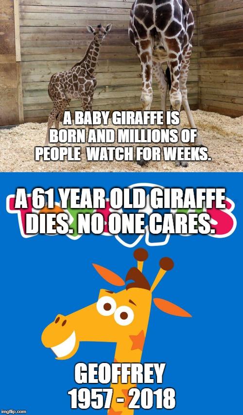Toys R Us Meme : Toysrus, Memes, Imgflip