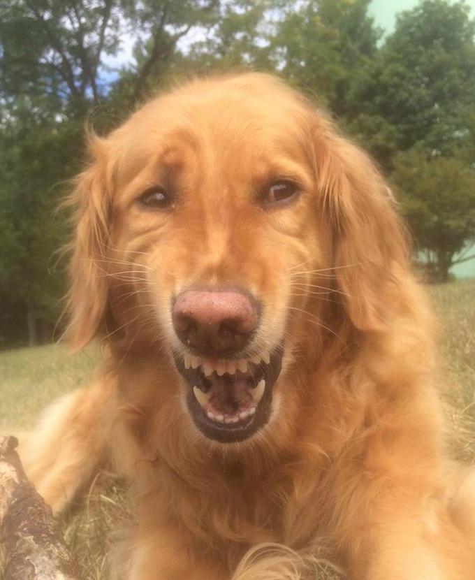 Dog Smiling Meme : smiling, Smile, Blank, Template, Imgflip