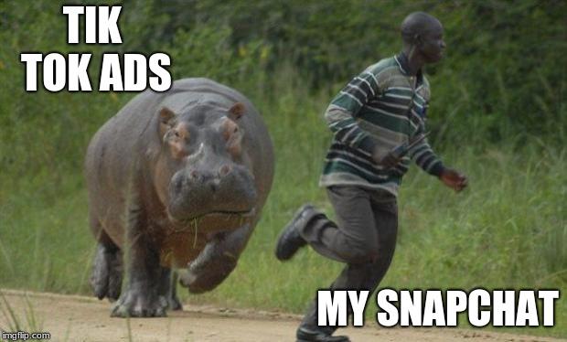 Hippo Chase Memes Imgflip