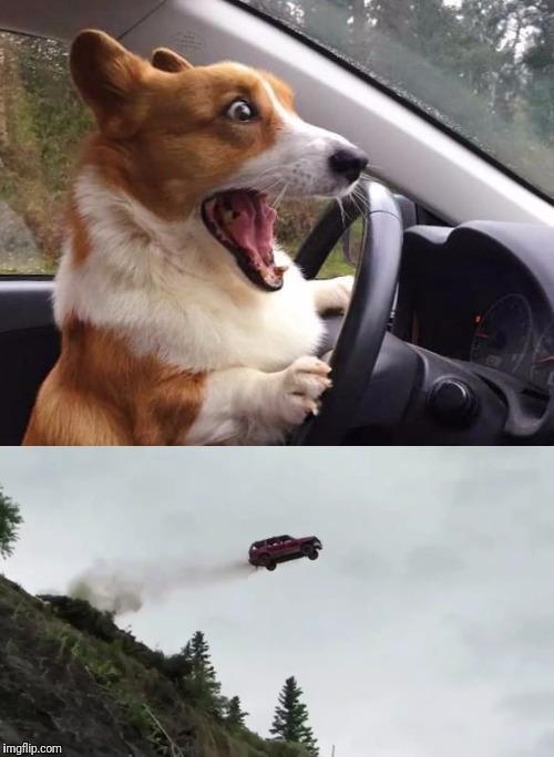 Dog Driving Meme : driving, Driving, Memes, Imgflip