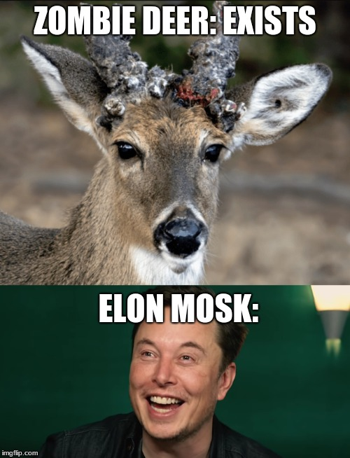 Dead Deer Meme : Image, Tagged, Elon's, Gaffaw, Imgflip