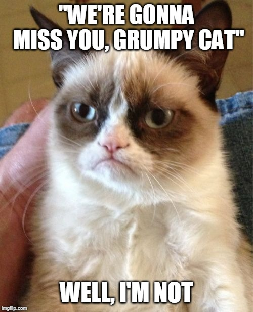 Miss You Cat Meme : Grumpy, Imgflip