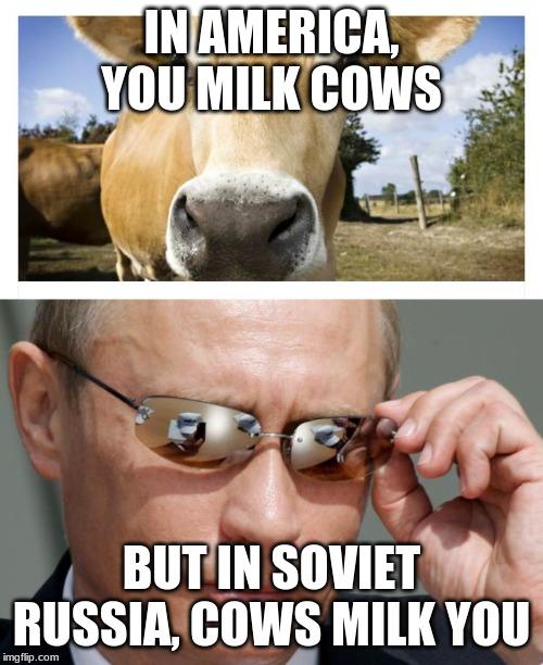 Milking Cow Meme : milking, Memes, Imgflip