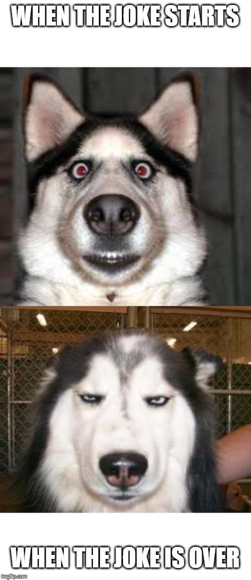 Not Impressed Dog : impressed, Impressed, Imgflip