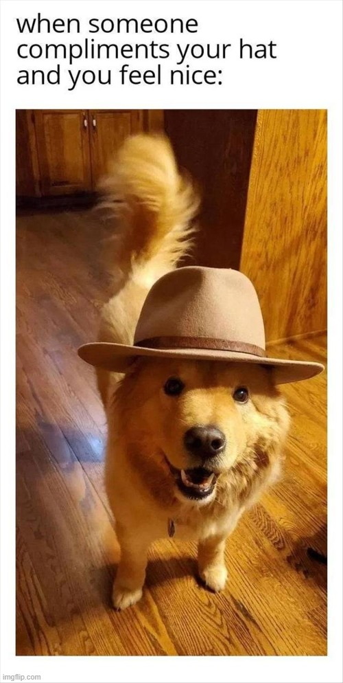 Dog With Hat Maker : maker, Image, Tagged, Memes,dogs,doggos,doggo, Imgflip