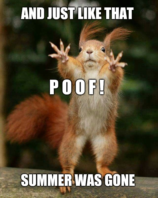 Summertime Meme : summertime, Summertime, Memes, Imgflip