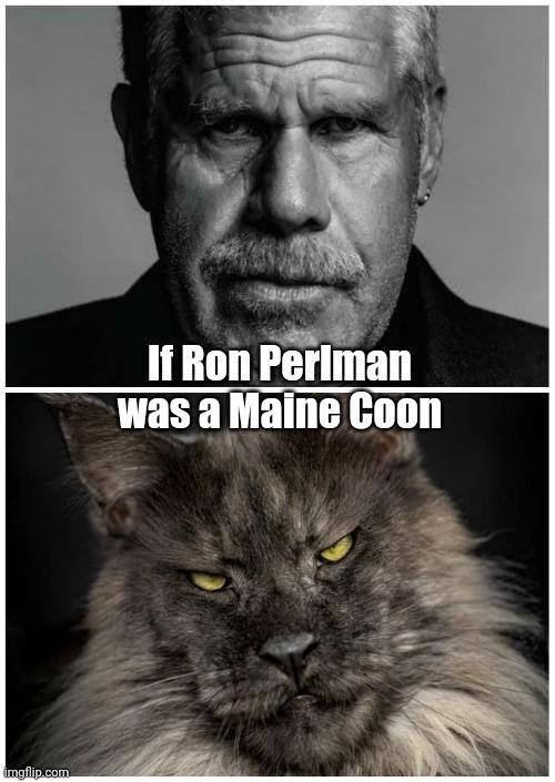Ron Perlman Maine Coon : perlman, maine, Perlman, Maine, Imgflip