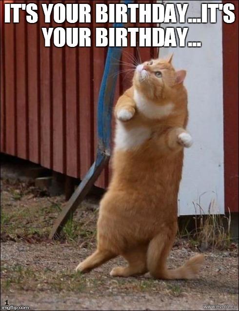 Dancing Birthday Meme : dancing, birthday, Dancing, Imgflip