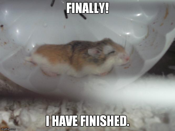 Sleepy hamster  Imgflip