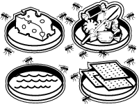 What Foods Attract Ants?-A Hands-on Biology Experiment