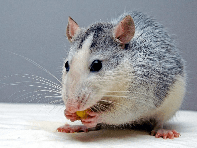 Things that attract mice - Insider