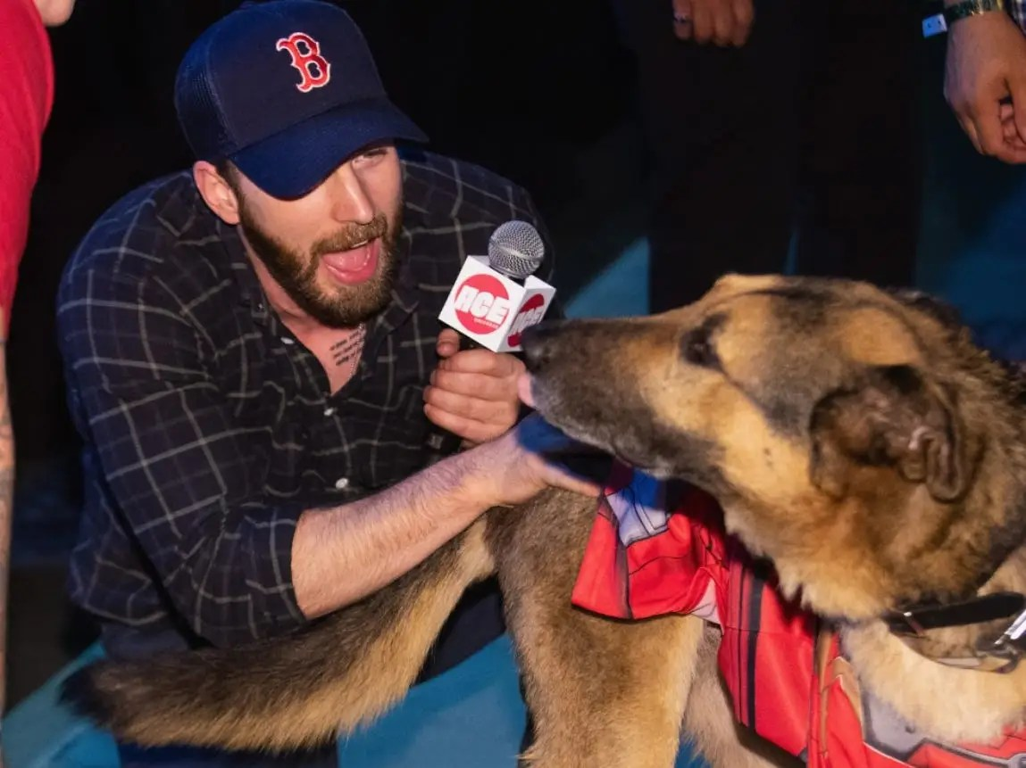 Chris Evans Fans Flood Twitter With Puppy Photos After