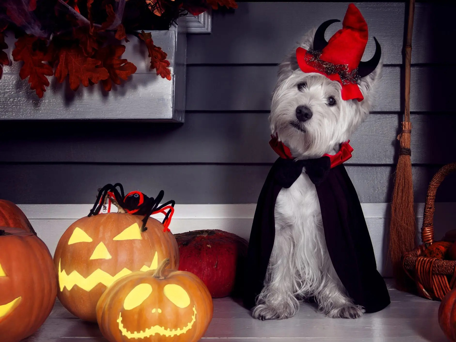 Whether halloween has sneaked up on you this year or you've been planning how to dress up your pet since last halloween, these adorable pet halloween costumes add so much fun to the spooky season. 15 Cat And Dog Costumes For Halloween