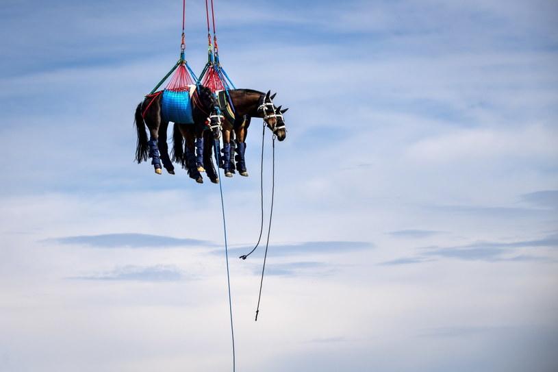 Transport koni w  Saignelegier /PAP/EPA