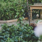 The Easiest Vegetables To Grow For Beginner Gardeners