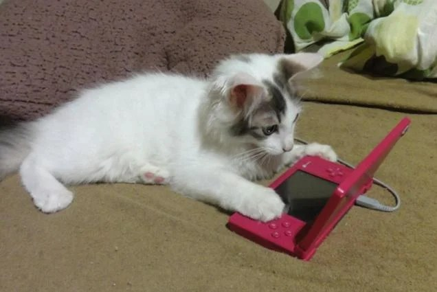 Image result for cats playing video games
