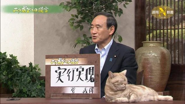 Cats Make Serious Japanese News Better