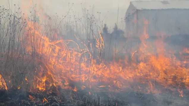 mxjsagoo88qefsxbnn7d The Midwest's Active Fire Season Is a Warning | Gizmodo