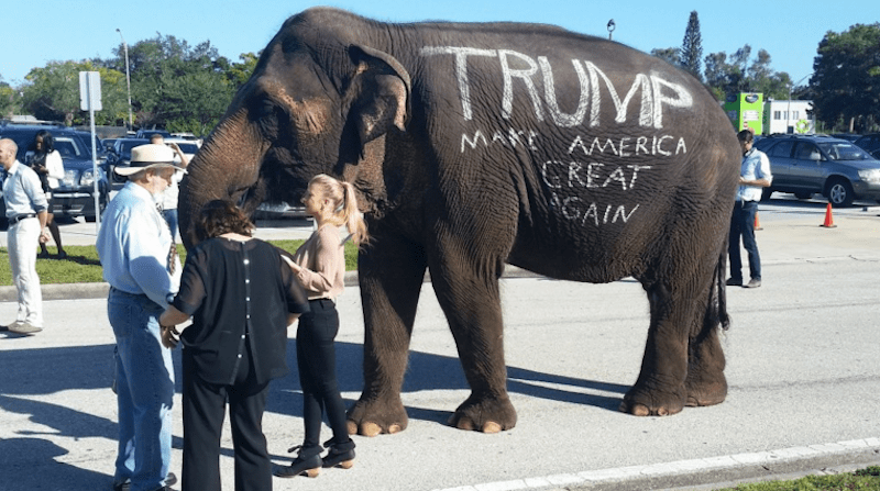 Donald Trump Rally Features Circus Elephant Owned by Man Who Was Repeatedly Arrested for Animal Cruelty