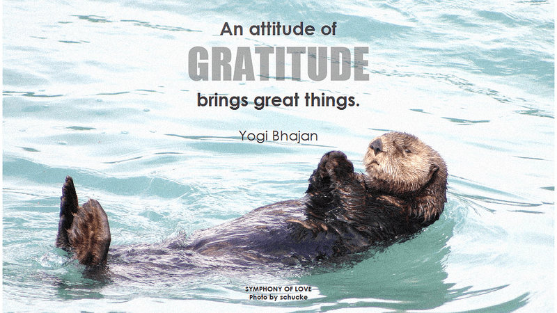 Experiment with Radical Gratitude and Instantly Improve Your Luck