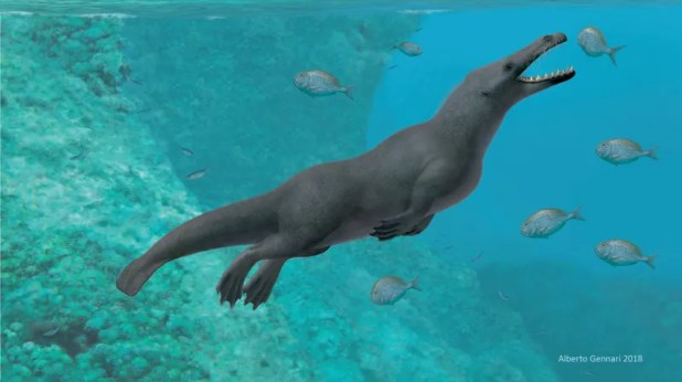 Artistic interpretation of Peregocetus pacificus, a four-legged whale from the Middle Eocene.