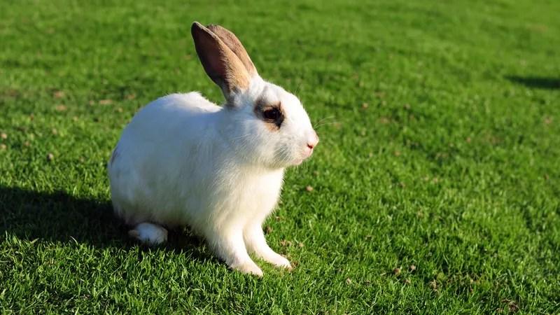 4 bunnies we must