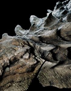 also how does  million year old dinosaur still have its skin rh gizmodo