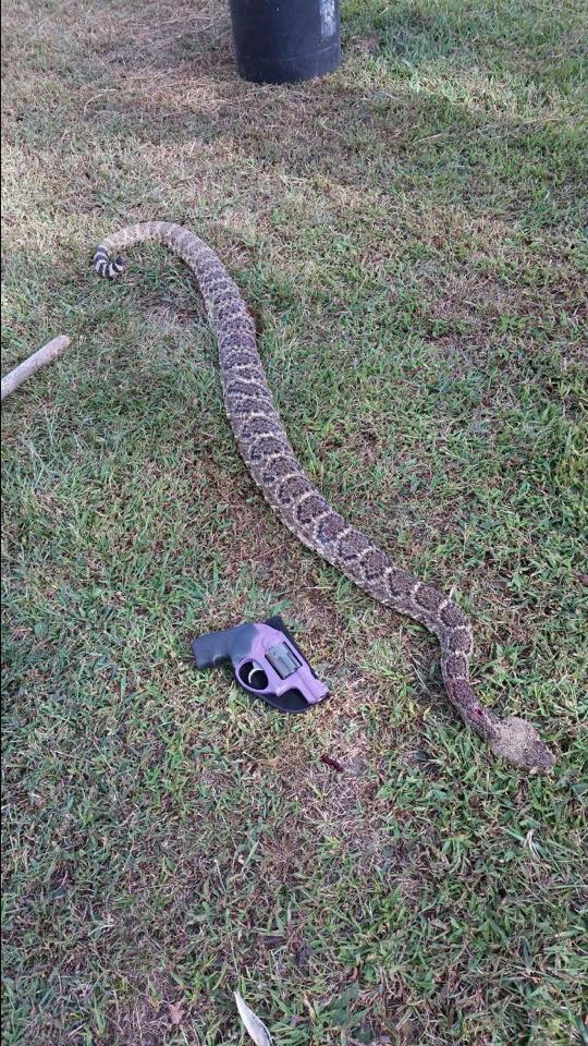 The Biggest Rattlesnake You'll Ever See?