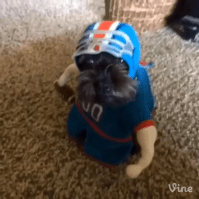 I Can't Stop Watching This Dog Run Around In A Football