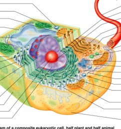 typical eukaryotic cell diagram [ 1600 x 900 Pixel ]