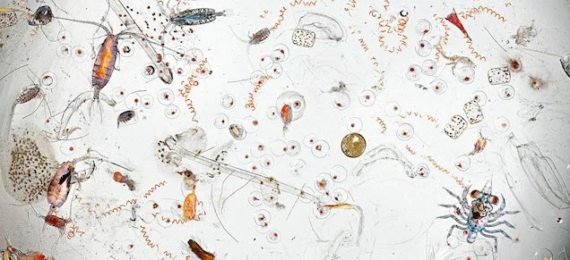 A single drop of seawater hides all these icky microscopic creatures