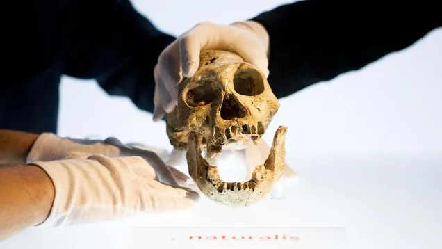 n5j5amay7vfmupukufpf Early Humans Were Walking Around With Ape-Like Brains, Study Finds | Gizmodo