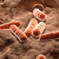 Tomar bacterias en lugar de vitaminas