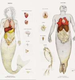 real mermaid diagram [ 1600 x 900 Pixel ]