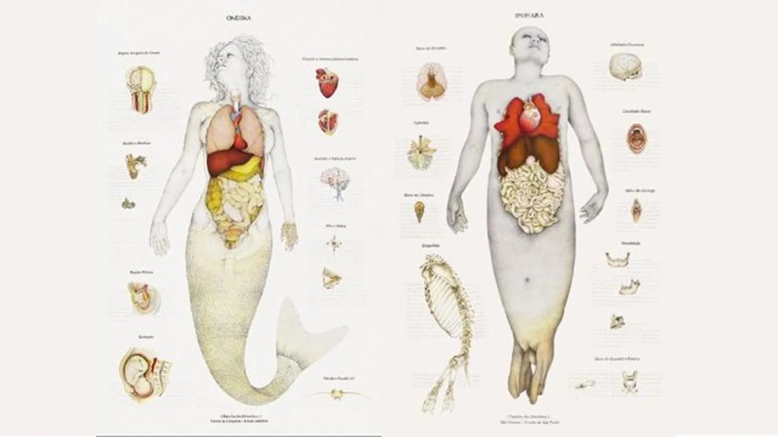 hight resolution of real mermaid diagram