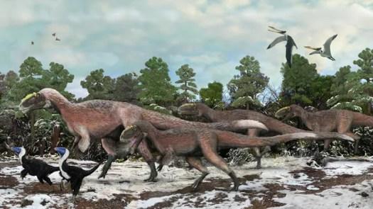 Packs of tyrannosaurs