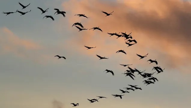 h2upjnjjoa6477dsqwvi Dead Birds are Falling Out of the Sky in the Southwest | Gizmodo