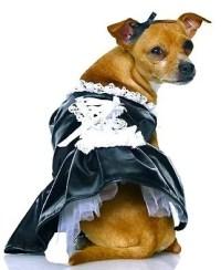 The 40 Sluttiest Dog Halloween Costumes