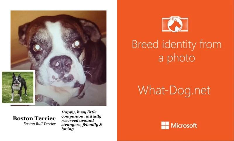 Averigua de qué raza es tu perro con esta nueva aplicación de Microsoft