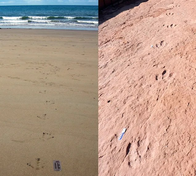 From Footprints to the Feet that Made Them